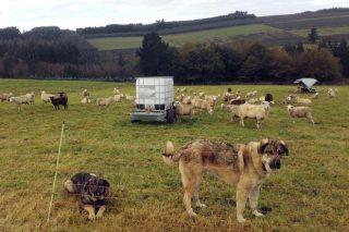 Cursos sobre manejo de pastos, prevención frente al lobo y gestión de ganaderías de ovino y caprino
