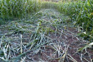 Unións urge a Medio Ambiente a que concrete las medidas para el control del jabalí en el Deza
