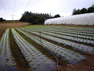 Los parados podrán realizar tareas agrarias sin perder su prestación por desempleo mientras dure el coronavirus