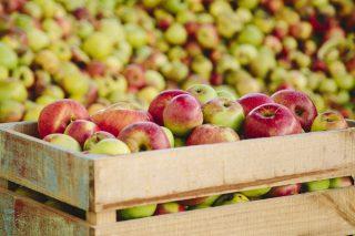 La cosecha de manzana de sidra bajará este año hasta un 70% en Galicia