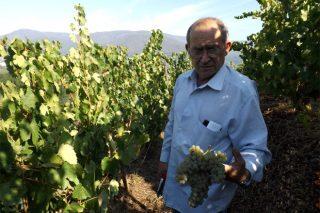 Bioca: el vino Godello más premiado del mundo