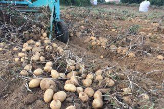 Un nuevo paso para que la IGP Patata de Galicia se extienda a todo el territorio