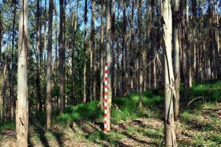 Alboroto en el sector forestal