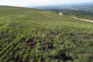 Experiencias de recuperación de praderas deterioradas en Ourense