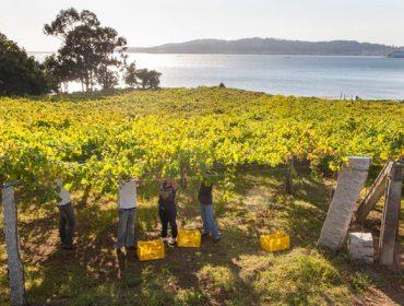 Primeros pasos del plan estratégico para impulsar las comarcas vitivinícolas de Galicia