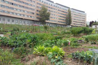 Santiago de Compostela, referente en España en la apuesta por las huertas urbanas