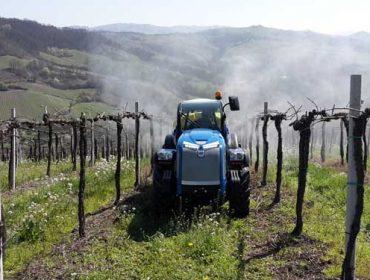 Demandan ayudas para el sector vitivinícola ante el desplome de las ventas