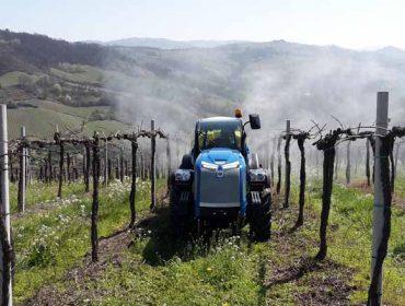 ¿Quedan residuos procedentes de pesticidas en el vino y en los suelos?