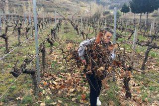 ¿Es aconsejable incorporar los restos de poda a la viña?