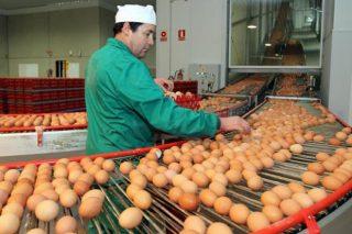 Los productores de huevo ponen en marcha la primera estrategia conjunta de promoción