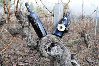 Este es el vino gallego elegido en Alemania el mejor de España: Lagar do Cigur Crianza 2013