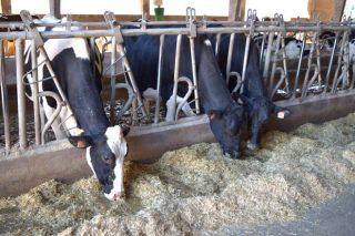 Reclamación del Sindicato Labrego por la cláusula de costes de los contratos de la leche