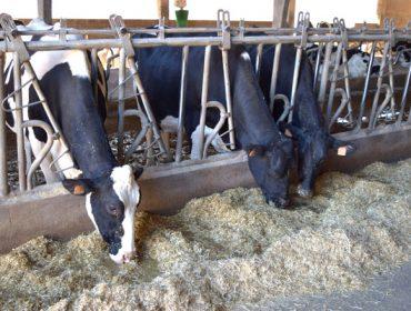 'Conta Láctea', la aplicación para granjas orientada a calcular costes de producción