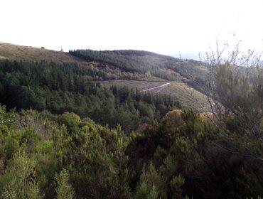 Selga convoca una mesa de trabajo sobre las normativas forestales en preparación