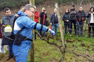 Basf presenta un producto innovador para prevenir las enfermedades de la madera en viñedo