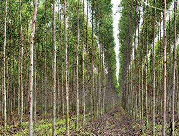 'Multicote Agri', nutrición eficaz para los árboles forestales