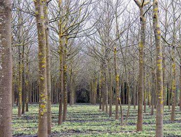 Talleres online de FSC sobre gestión y certificación forestal