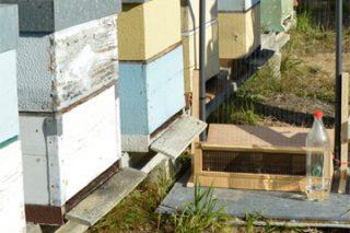 Curso sobre control de la vespa velutina el próximo lunes en Monforte