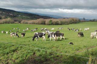 La Xunta se marca como objetivo que Galicia sea declarada región libre de tuberculosis bovina