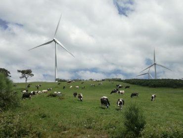 Proponen en el Parlamento un contrato tipo para los afectados por parques eólicos