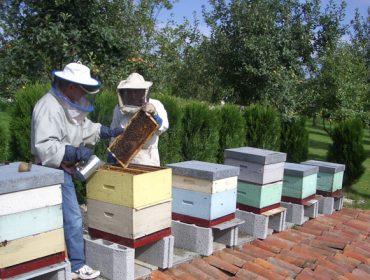 España prevé aumentar en un 20% el número de apicultores en los próximos 3 años