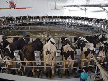 Repunta el precio de la leche, que alcanza el valor más alto de los últimos cinco años