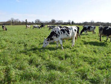 «En la franja atlántica europea se puede producir leche con la menor huella de carbono del mundo»