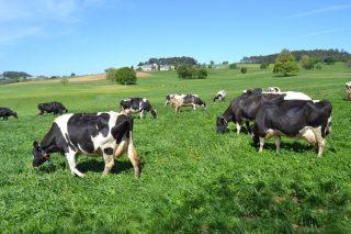 «¿Está mejor el sector lácteo gallego tras 5 años sin cuotas?»