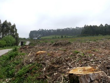 Trece ayuntamientos han solicitado las ayudas del plan de mantenimiento de franjas de biomasa de la Diputación de Lugo