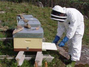 Formación en prevención de riesgos en la apicultura