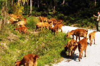 Curso en San Sadurniño sobre iniciación y mejora de la ganadería de ovino y caprino