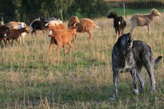 Curso sobre convivencia y medidas de prevención de ataques de lobo a la ganadería