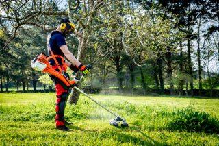 Vespa velutina: 5 claves a tener en cuenta a la hora de desbrozar o cortar madera