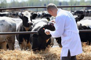 5 claves que la experiencia veterinaria puede aportar frente al Covid-19