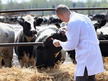 Reparto de las ayudas para Agrupaciones de Defensa Sanitaria Ganadera de Galicia