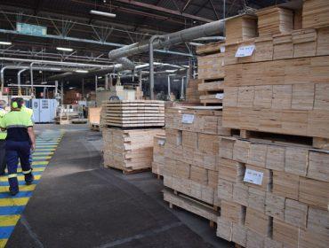 Las talas de pino se frenan tras parar Finsa, pero se mantiene el mercado de eucalipto