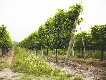 Ventajas del abono orgánico de Aviporto en cultivos de huerta, viña y frutales