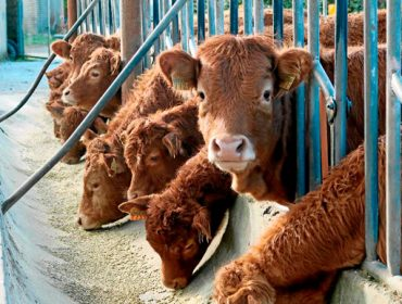 Publicada la orden de Medio Rural que permite adelantar 18,5 millones a ganaderos y agricultores