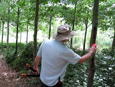 Talleres sobre técnicas forestales de poda en pinos y frondosas caducifolias