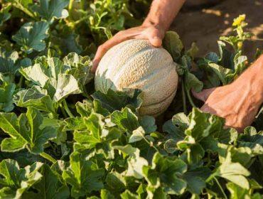 ¿Cómo tiene que cotizar la agricultura a tiempo parcial?