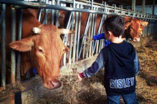 El Consorcio de la vaca roja, un caso de éxito en la valorización de la leche