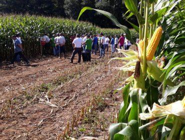 Catálogo Delagro de semillas de maíz forrajero 2020: Variedades adaptadas a las necesidades de cada granja