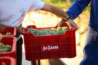 La Xunta activa por segundo año consecutivo el Plan de Control de vendimia