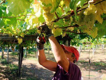 Así repartirá el Gobierno en el sector del vino los 90 millones de € de ayudas para paliar la caída de ventas por el COVID-19