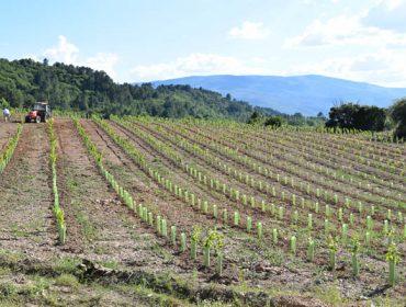 Denuncian la tardanza de la Xunta en la resolución y pago de los planes de restruturación de viñedo