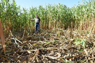 Sorpresa en ganaderos y agricultores por las llamadas de la Xunta a pocos días de las elecciones