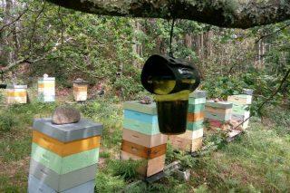 La Xunta distribuirá 15.000 trampas contra la vespa velutina