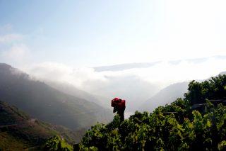 Regina Viarum, la viticultura heroica de las riberas de Amandi