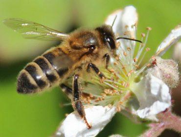 Día Mundial de las Abejas: ¡Poned una colmena en vuestra vida!