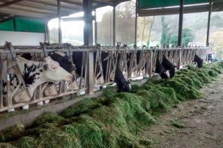 El futuro de la producción de leche: Vacas más eficientes, sostenibilidad y atracción de mano de obra